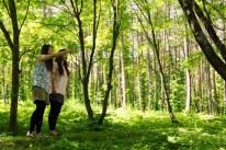 岩手県県民の森