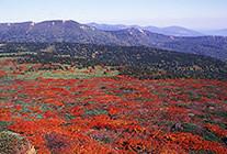 四季の八幡平